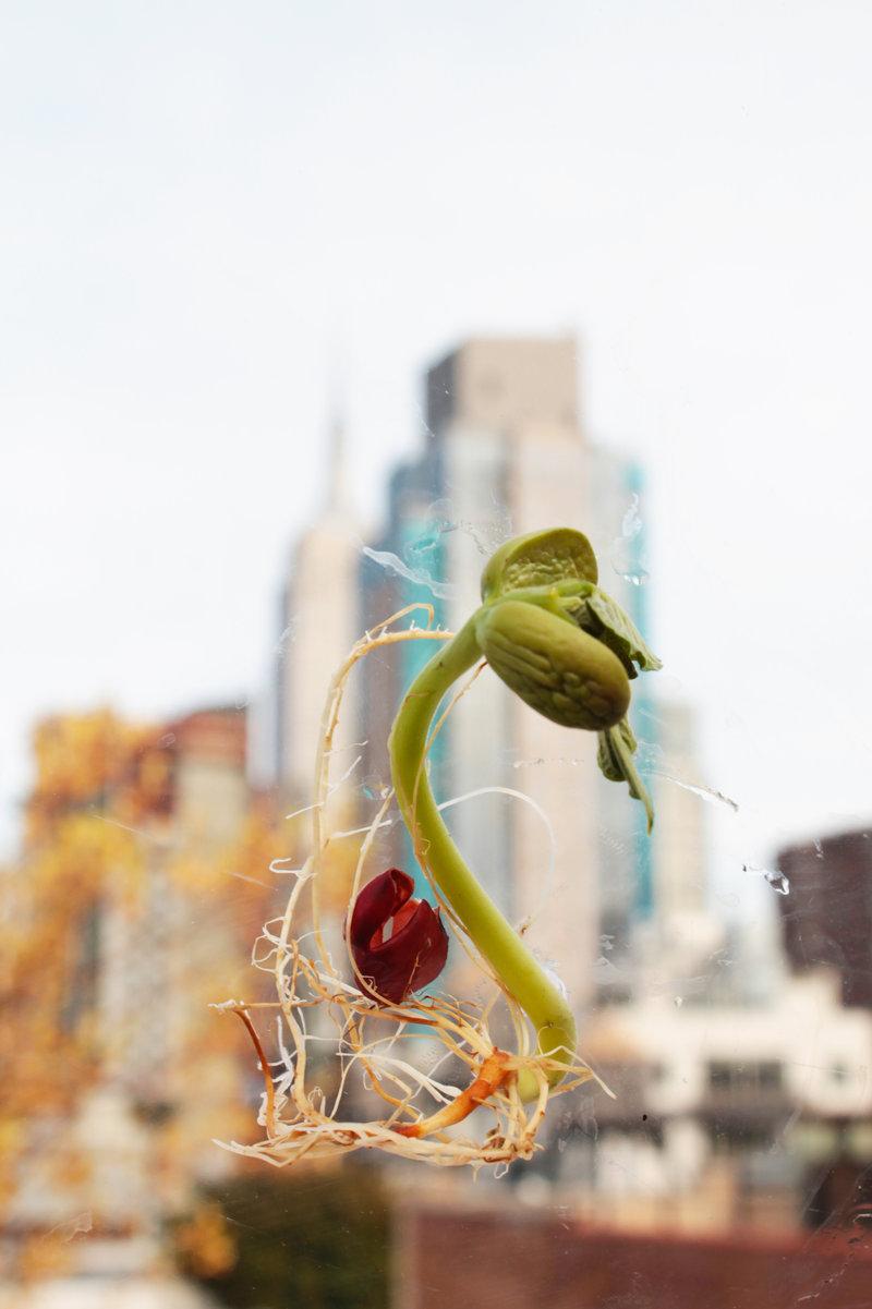Germen NYC | Llaguno Isabel