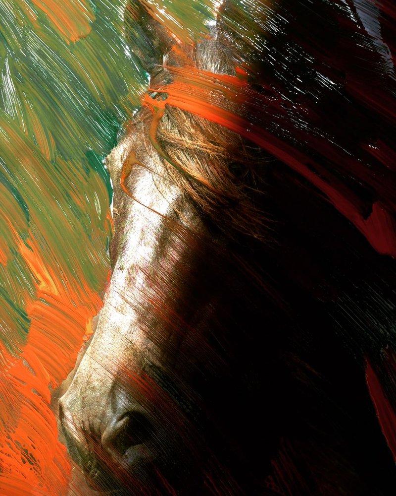 Dávila Ricardo / Cabeza de caballo | Dávila Ricardo