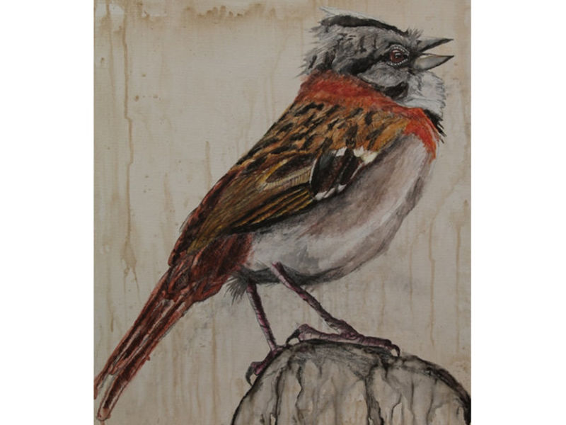 Martínez / 32 aves de mi jardín serie 4