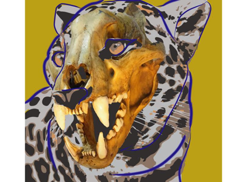 Deconstrucción zoológica serie (Jaguar)